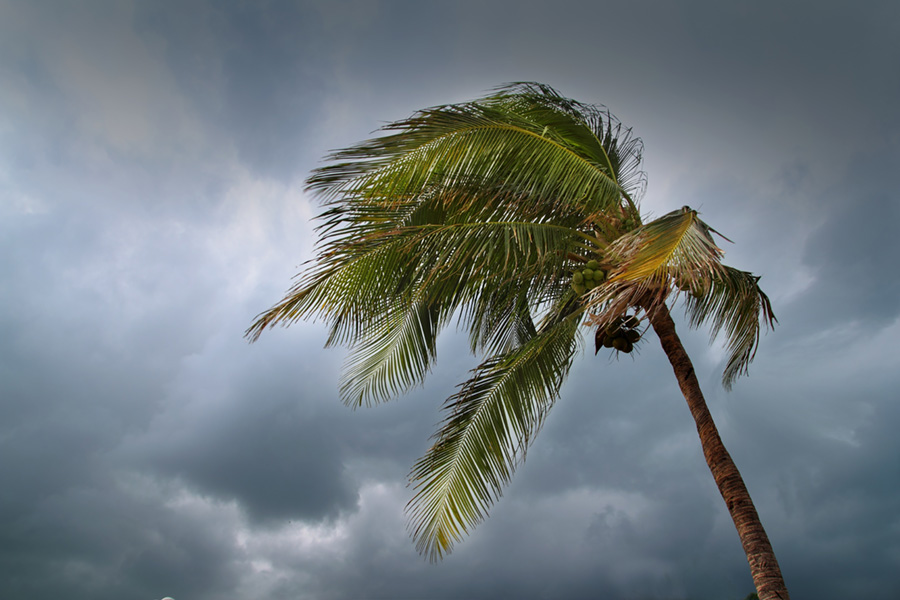 Wind Mitigation